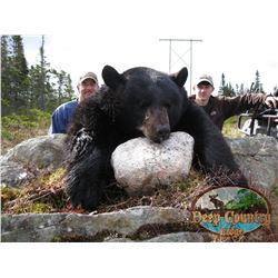 5-day Newfoundland Black Bear Hunt for One Hunter