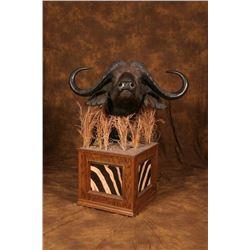 Taxidermy for Cape Buffalo