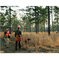 1-day/1night Georgia Bob White Quail Hunt for Two Hunters