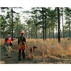 1-day/1night Georgia Bob White Quail Hunt for Two Hunters