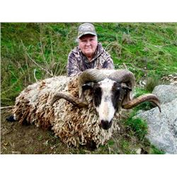 5-day New Zealand Arapawa Sheep and Wallaby Hunt for One Hunter and One Observer