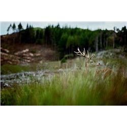5-day Scotland Scottish Red Deer Hunt for One Hunter and One Observer