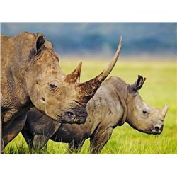 18-day South Africa Rhino Vita-Dart Safari for One Hunter and One Observer