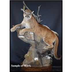 Life Size Mountain Lion Mount
