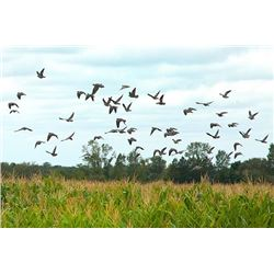 4-day Argentina Dove Hunt for Eight Hunters
