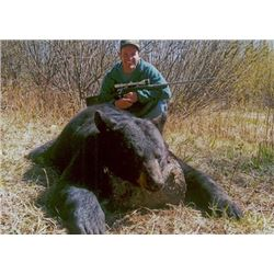 6-day Alberta Black Bear and Wolf Hunt for One Hunter