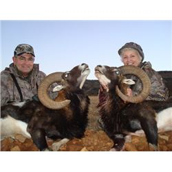 5-day Iberian Mouflon Hunt in Spain for One Hunter and One Observer