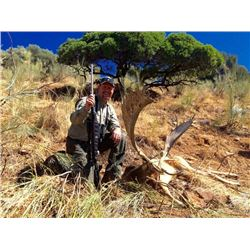 5-day Spain European Fallow Deer and Iberian Mouflon for One Hunter and One Observer
