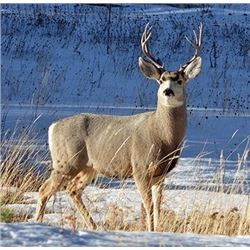 5-day Unguided Alaska Sitka Black-tailed Deer hunt for One Hunter