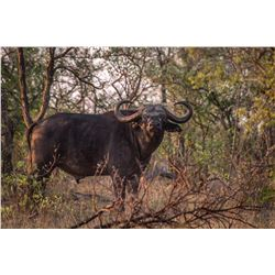 7-day South Africa Cape Buffalo Hunt for One Hunter and One Observer