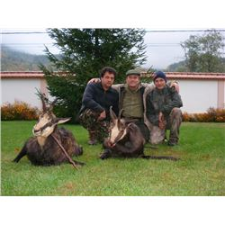 6-day Hungary Roe Deer and Carpathian Chamois Hunt for One Hunter and One Observer