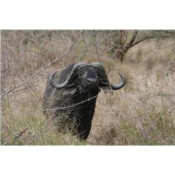 7-day South Africa Nyala and Plains Game Hunt for Two Hunters and Two Observers