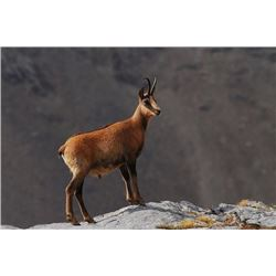 5-day Spain Cantabrian Chamois Hunt for One Hunter and One Observer