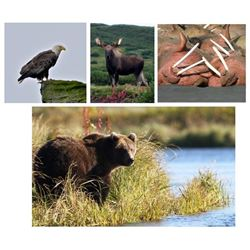 Alaska Walrus and Wildlife Tour Package for 4