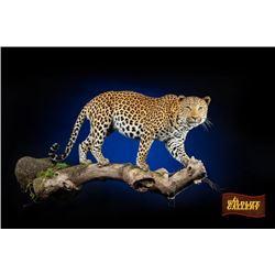 Life-size Leopard Mount