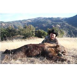 4-day California Black Bear Hunt for One Hunter