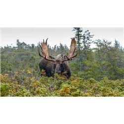 7-day/6-night Newfoundland Eastern Canadian Moose Hunt for One Hunter