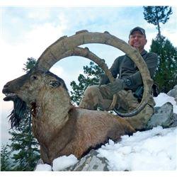7-day Turkey Anatolian (Bezoar) Ibex Hunt for Two Hunters