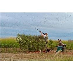 4-day Bolivian Dove and Pigeon Shoot for Twelve Hunters