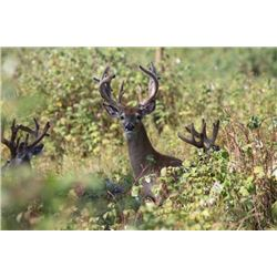 4-day/3-night Northeastern White-tailed Deer Hunt for Two Hunters and Two Observers