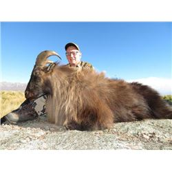 5-day New Zealand Free-Ranging Himalayan Tahr Hunt and Arapawa Sheep Hunt for One Hunter and One Obs