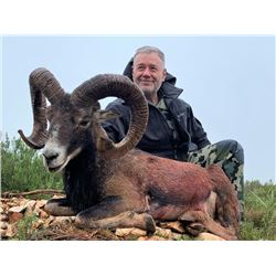 5-day Spain Iberian Mouflon Hunt for One Hunter and One Observer
