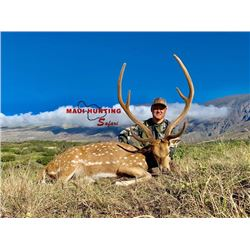 3-day/3-night Hawaii Axis Deer Hunt and Sporting Clay Shoot for Two Hunters and Two Observers