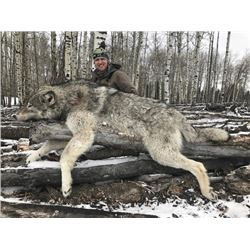 6-day Alberta Wolf Hunt for Four Hunters
