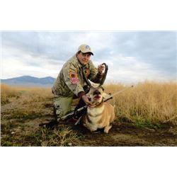 4-day Nevada or Utah Pronghorn Hunt for One Hunter