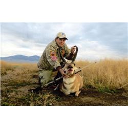 4-day Nevada or Utah Pronghorn Hunt for One Hunter
