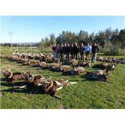 1 Day Spanish Monteria Red Deer and Boar Hunt for Two Hunters & 1 Day of Sightseeing