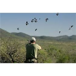4 Day/3 Night Argentina Dove Hunt for 6 Hunters