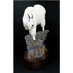 $2,000 Taxidermy Credit to Reflections of the Wild #1