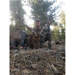 Guided Archery Elk Hunt Idaho