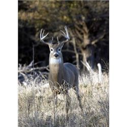 3-Day/3-Night Texas Guided Whitetail Hunt for 1 Youth