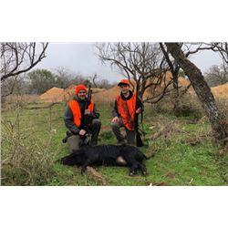 3-Day/2-Night Texas Hog Hunt for 2 Hunters