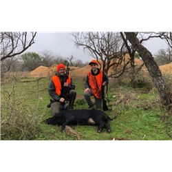 3-Day/2-Night Texas Hog Hunt for 2 Hunters