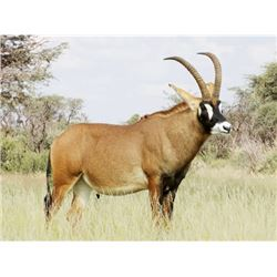 5-Day South African Safari for 1 Hunter with Roan and Golden Oryx