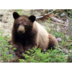 5-Day Guided Canadian Black Bear Hunt for 1 Hunter