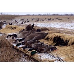 Guided 1-Day Nebraska Waterfowl Hunt for 2 or 4 hunters