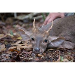 7-Day Mexico Campeche Jungle Hunt for 2 Hunters
