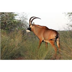 7-DAY ROAN HUNT FOR ONE HUNTER AND ONE NON-HUNTER IN South Africa