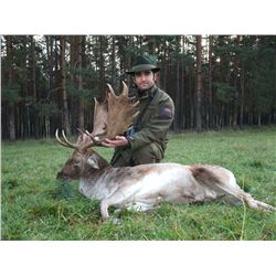 3-Day Fallow Deer Hunt in Austria/Hungary for One (1) Hunter
