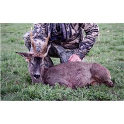 6-Day Spanish Cantabrain Chamois and European Roe Deer Hunt for One (1) Hunter