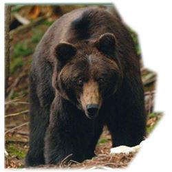 BLACK BEAR AND FISHING | NORDIC LODGE | Reindeer Lake Saskatchewan