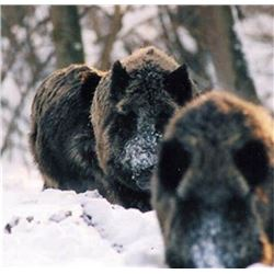 SIX DAYS HUNTING AND TOURING IN SERBIA | with Safari Art for Wild Boar
