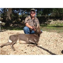 AXIS DEER, BLACKBUCK ANTELOPE, SIKA DEER or EXOTIC SHEEP | Calhoun Ranch - Wimberley, TX