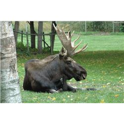 MOUNTAIN SPIRIT OUTFITTERS   Moose and Black Bear Hunt in British Columbia