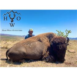 Bull Bison | West Texas