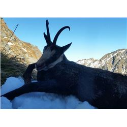ROMANIA HUNTING OUTFITTERS | Chamois and Roe Deer Combo Hunt